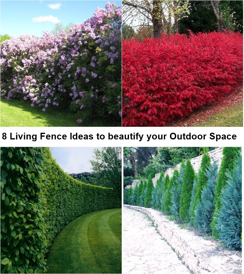 8 living fence ideas to beautify your outdoor space